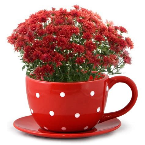 Coffee Cup Planter by 17 Best Images About D Is For Dot Dot Polka Dots On