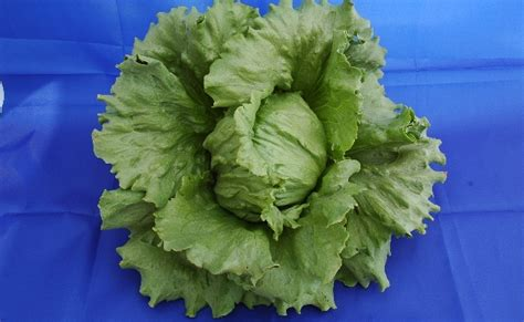 carbohydrates lettuce 15 healthiest green vegetables diy health remedy