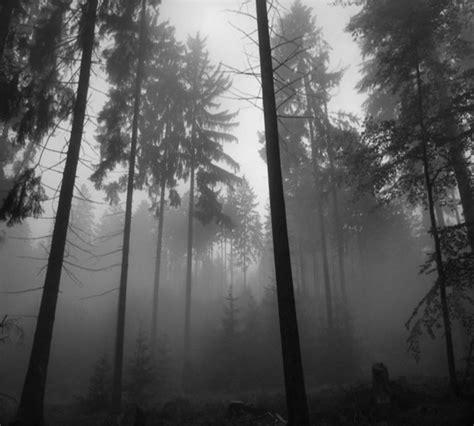 imagenes lindas en blanco im 225 genes en blanco y negro taringa