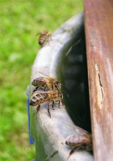 how to raise bees in your backyard 187 best images about garden on pinterest gardens