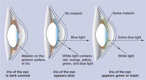 inheritance pattern eye color the inheritance of eye color harian netral harian netral
