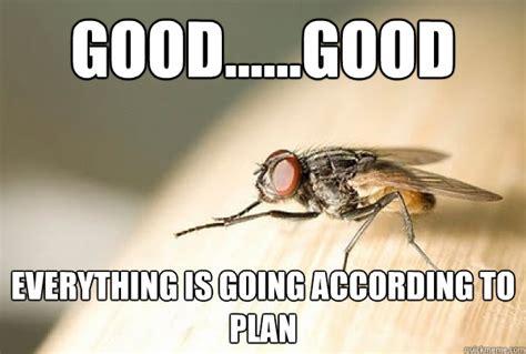 Fly Meme - fly meme memes
