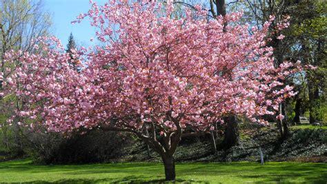 o fruitier aubonne the judas tree the hawk s nest