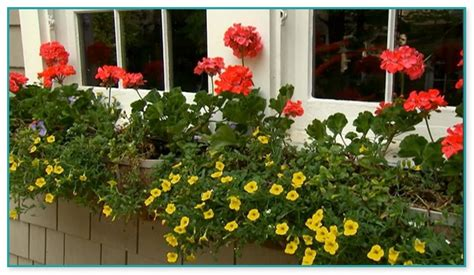 p allen smith container gardens kitchen cabinet ideas for small spaces