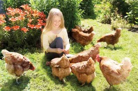 Backyard Chicken Keeping Raising Backyard Chickens Animals Grit Magazine