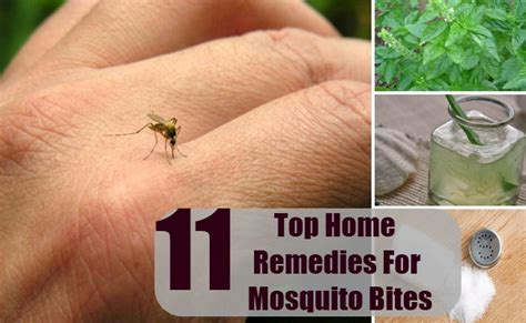 top 11 home remedies for mosquito bites remedy