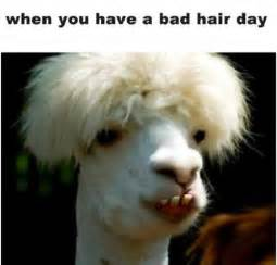Bad Hair Day Bad Hair Day Pictures Quotes Memes Images