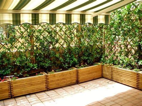 piante per fioriere esterne piante per fioriere esterne idea creativa della casa e