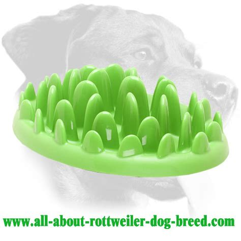how much do rottweilers eat large plastic rottweiler feeder for healthy ka17 1075 interactive pet