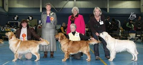 stormerick golden retrievers op2008 the golden retriever club