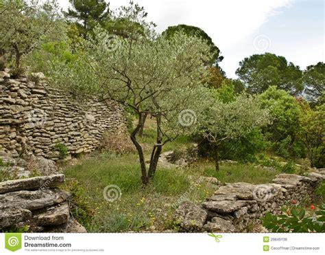 olivenbaum im garten olivenbaum im garten lizenzfreie stockbilder bild 29845139