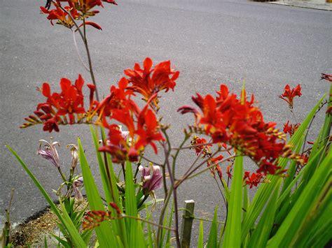 flowers for hummingbird garden drought tolerant plants minerva s garden
