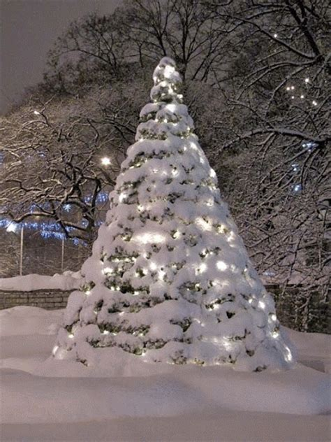 snow covered christmas trees twinkling snow covered tree pictures photos and images for and