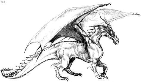 Coloring Pages Of Dragons Realistic | realistic dragon coloring pages for adults coloring home