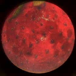 Straberry Moon by The Village Voice Under The Strawberry Moon