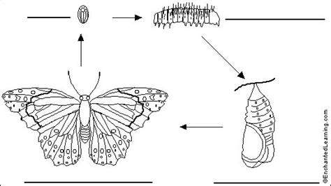 millipede cycle diagram label butterfly cycle printout enchantedlearning
