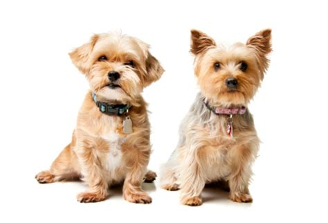 how much fish for dogs how much fish for small dogs what s up with my pet