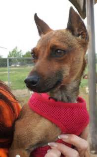 Adopted 276 doggies adopted so far sadiehey my name is sadie
