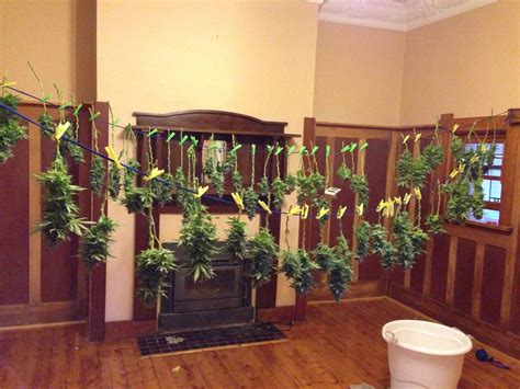 marijuana drying room the basics tutorial learn how to grow cannabis indoors grow easy