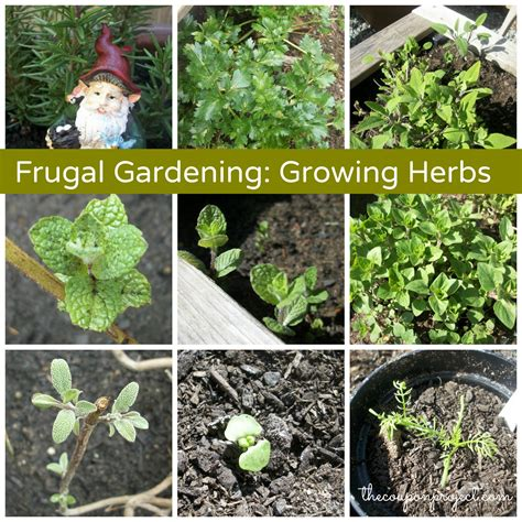 growing herbs frugal gardening if i could only grow one thing