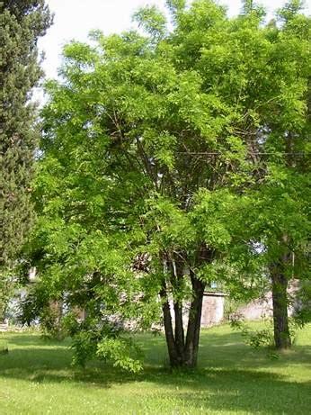 alberi da giardino sempreverdi piante sempreverdi da terrazzo come coltivare le piante