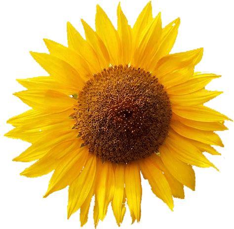 canzone fiore i fiori nella canzone italiana
