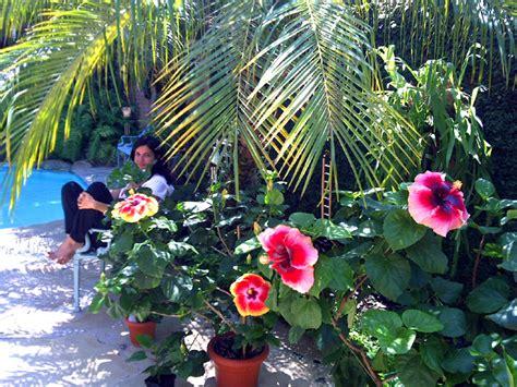hibiscus garten valley hibiscus worldwide hibiscus garden in the