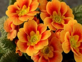 color flower orange flowers colors photo 27178561 fanpop
