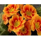 Send Pro Orange Flowers For Best Friends  Beautiful Black And