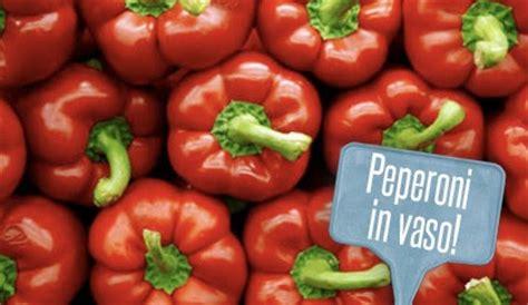 come coltivare i peperoni in vaso orto in vaso come coltivare i peperoni sul balcone leitv