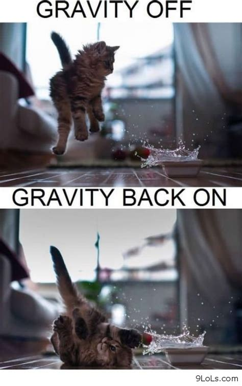 Gravity Meme - quotes funny sexy memes quotesgram