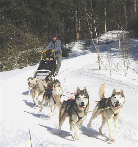 sledding vermont vermont sled rides and tours