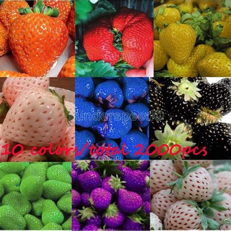strawberry color 10 colors 200 color strawberry seeds black blue