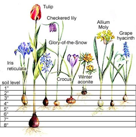 all the dirt on gardening spring blooming flower bulb