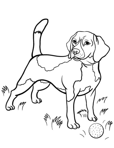 Beagle Coloring Pages Beagle Coloring Page Free Beagle Online Coloring Dog by Beagle Coloring Pages