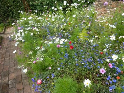 how to create a cottage garden border cottage garden border garden gardening