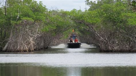 everglades boat tour florida city matt from everglades city airboat tours picture of