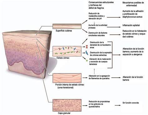 picores en el cuero cabelludo causas remedios caseros para la psoriasis en el cuero cabelludo