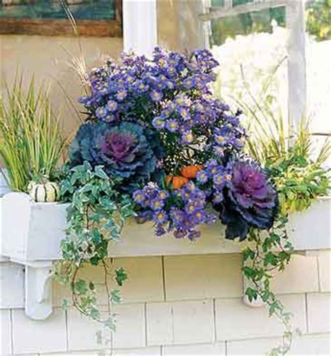 fall flowers for window boxes decor window box