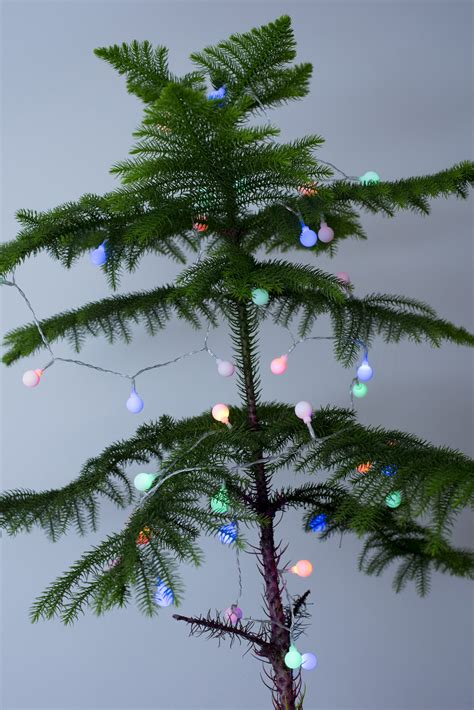 twinkling lights on a small natural christmas tree 9627