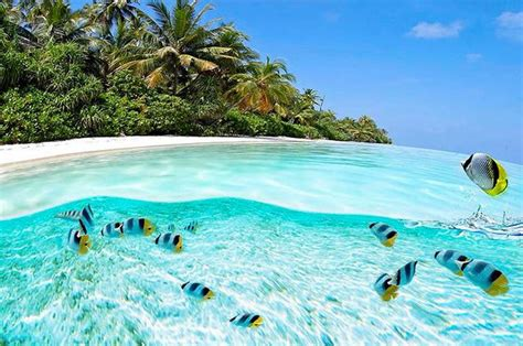 clearest ocean water in the world 35 clearest waters in the world to swim in before you die