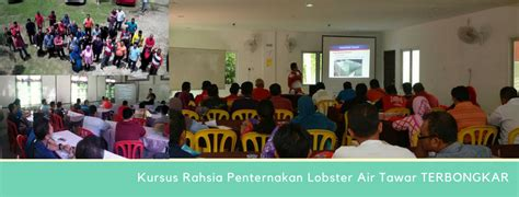 Benih Lobster Air Tawar Selangor kursus penternakan lobster air tawar home