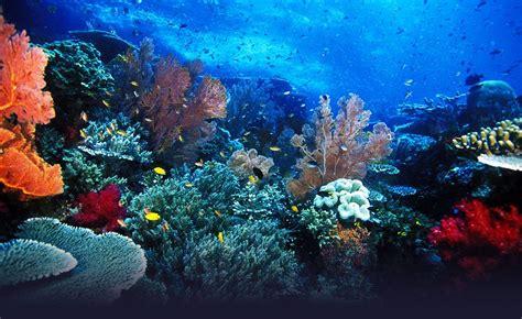 Raja Ampat, Papua: The Amazon of the Oceans   Indonesia'd