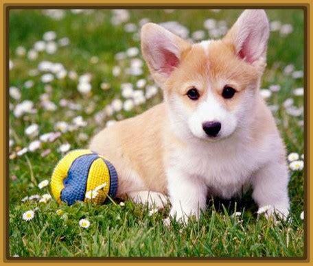imagenes navideños hermosos im 225 genes de perros bonitos y chiquitos archivos imagenes