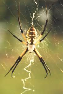 Garden Spider With Legs Spider Pictures Photos Images Of Various Spider Species