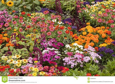 variety of flowers for garden flower bed stock image image 35685091