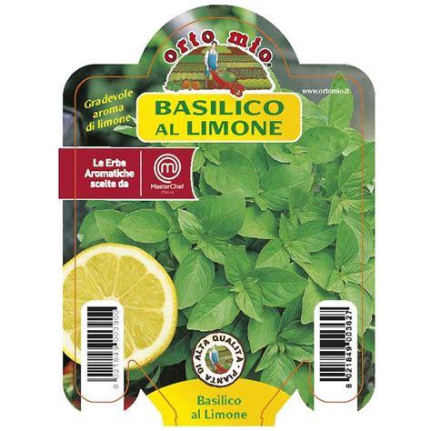 basilico piastrelle 3 piante in vaso 216 10cm di basilico al limone ortomio orto