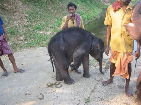 bathtub for baby in india ready for an elephant ride in kerala photo kochi india