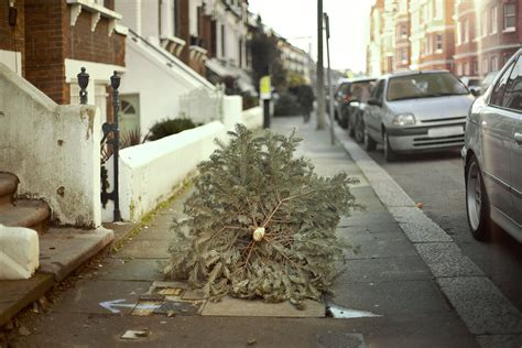 when to take your christmas tree down and how to get rid