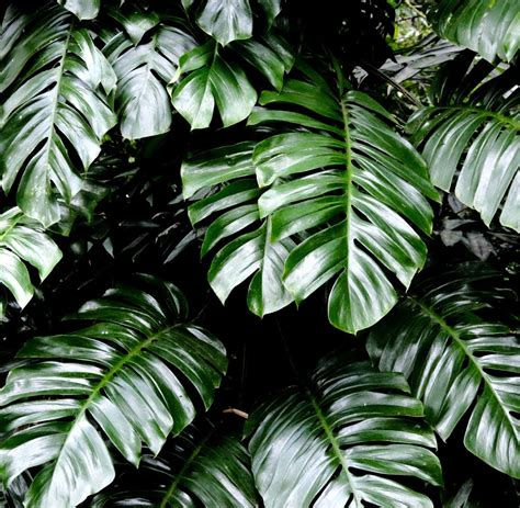 zimmerpflanzen gross experten tipps zehn zimmerpflanzen die herrlich